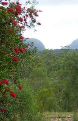 Acres of pristine bushland